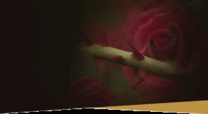 rosalones header