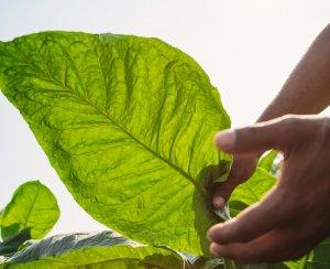 Priming Process Joya de Nicaragua
